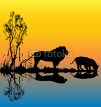 Fototapety Lion Waterhole