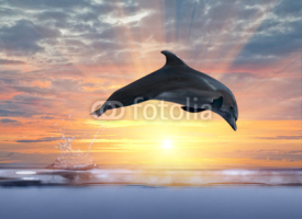 Fototapety dolphin jumping above sunset sea