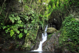 Fototapety Hidden rain forest waterfall with lush foliage and mossy rocks
