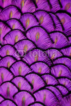 Naklejki Purple Feathers