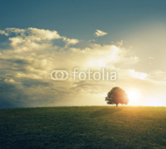 Fototapety Sunset in grassy field.