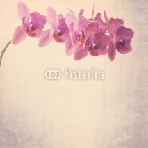 Naklejki textured old paper background phalaenopsis orchid