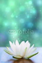 Fototapety white water lilly flower