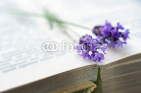 Naklejki Open book with blue lavender