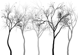 Fototapety foggy forest, vector