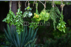 Obrazy i plakaty Set of herbs hanging and drying