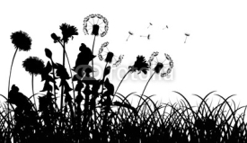 Fototapety silhouettes of dandelions in grass isolated on white