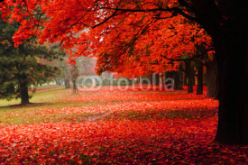 Fototapety red autumn in the park
