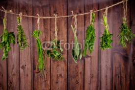 Fototapety Fresh herbs hanging on wooden background