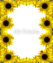 Naklejki frame of gold sunflowers