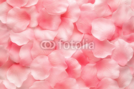 Obrazy i plakaty Beautiful delicate pink rose petals