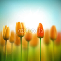 Naklejki Spring background with tulips