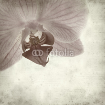 Fototapety textured old paper background with phalaenopsis;