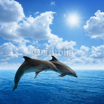 Fototapety Dolphins jumping