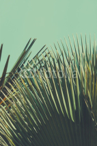 Naklejki Abstrac tropical vintage background. Retro toned.