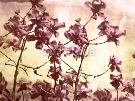 Fototapety Artistic background with magnolia