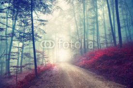 Fototapety Vintage magic forest road