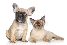 Naklejki Dog and cat on a white background
