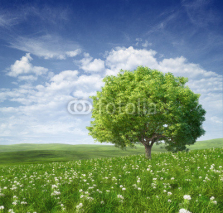 Fototapety Summer landscape with green tree