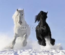 Obrazy i plakaty white and black horse