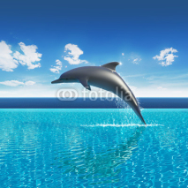 Fototapety Dolphin jumps above pool water, summer sky aquarium