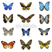 Fototapety 12 different butterflies