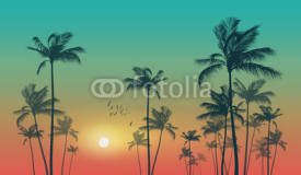 Fototapety Exotic tropical palm trees  at sunset