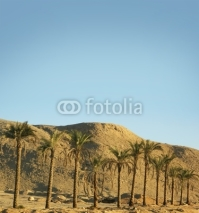 Naklejki A beautiful southern desert background with palm trees