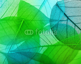 Fototapety Macro leaves
