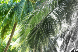 Naklejki Palm trees, retro stylization, close-up