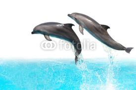 Fototapety Jumping Dolphins