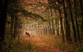 Naklejki Red deer in a forest