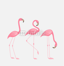 Fototapety Tropical bird flamingos