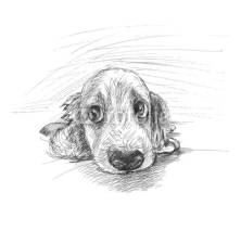 Fototapety Cute puppy sketch