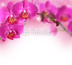 Obrazy i plakaty Orchids design border with copy space