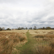 Obrazy i plakaty Landscape of Richmond Park