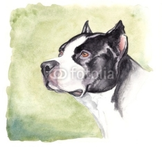 Fototapety watercolor pitbull