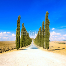 Naklejki Tuscany, Cypress Trees white road rural landscape, Italy, Europe