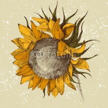 Naklejki hand drawn sunflower