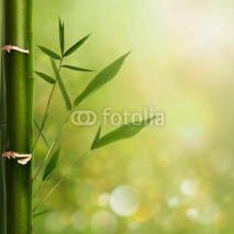 Naklejki Natural zen backgrounds with bamboo leaves