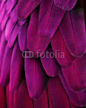 Naklejki Pink and Purple Feathers