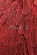 Fototapety Macaw Feathers (Red)