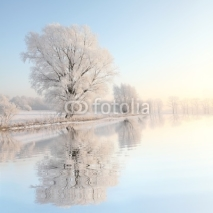 Naklejki Frosty winter tree against a blue sky with reflection in water