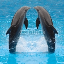Fototapety dolphin twins