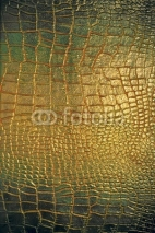Obrazy i plakaty Reptile leather texture