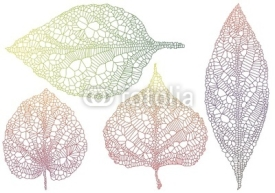 Naklejki textured autmn leaves, vector
