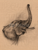 Fototapety elephant head pencil drawing