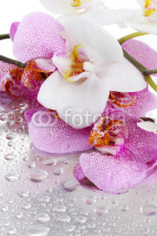 Naklejki pink and white beautiful orchids with drops
