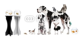 Naklejki Group portrait of animals in front of black and white background