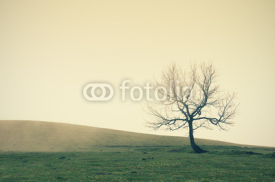 Fototapety lonely tree with vintage filter effect